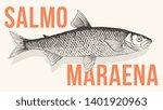 common whitefish or better... | Shutterstock .eps vector #1401920963