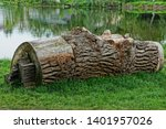 A Large Gray Dry Poplar Log...