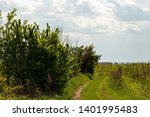vineyard on the outskirts of... | Shutterstock . vector #1401995483