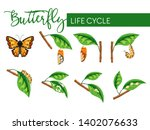 Butterfly Insect Life Cycle...