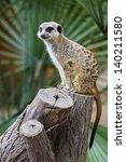 meerkat  meercat   surikate ... | Shutterstock . vector #140211580