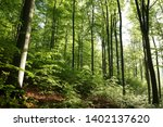 spring deciduous forest at dawn. | Shutterstock . vector #1402137620