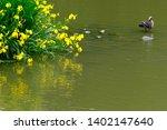 wild bird duck and yellow iris | Shutterstock . vector #1402147640