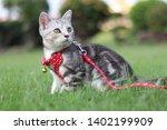 Stock photo kitten looked at the sun kitten in garden kitten on blurred background baby cat cat 1402199909