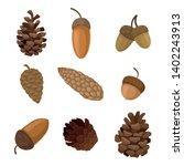 Set Of Acorns And Cones. Vecto...
