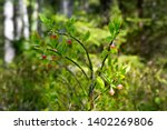 sprig of blueberries with... | Shutterstock . vector #1402269806