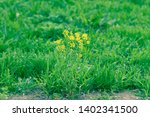 flowers and dew on the grass.... | Shutterstock . vector #1402341500