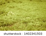 flowers and dew on the grass.... | Shutterstock . vector #1402341503