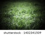 flowers and dew on the grass.... | Shutterstock . vector #1402341509
