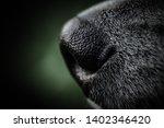 alaskan malamute breed dog... | Shutterstock . vector #1402346420