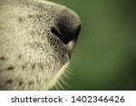 alaskan malamute breed dog... | Shutterstock . vector #1402346426
