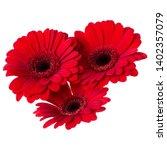 three   red gerbera flower... | Shutterstock . vector #1402357079