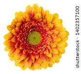 orange gerbera flower head... | Shutterstock . vector #1402357100