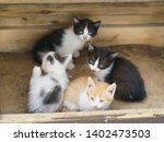 Stock photo four little kittens are sitting near the wooden house all kittens are colorful one of them itches 1402473503