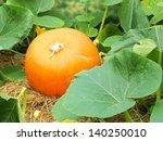 pumpkin natural | Shutterstock . vector #140250010