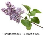 Branch Of A Lilac Isolated On...