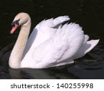 Swan On The River  Dublin ...
