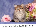 Stock photo siberian cats and kittens on beautiful neutral background perfect for postcards 1402561013