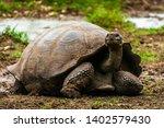 Stock photo giant turtle in gal pagos islands ecuador 1402579430