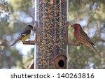Bright Cheerful Yard Birds ...