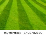 Green Grass Lawn Mowed In A...