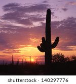Saguaro's  The Giant Of All...