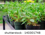 lots of flowers ready to... | Shutterstock . vector #140301748