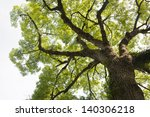 summer tree on a white... | Shutterstock . vector #140306218