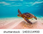 Stock photo hawaiian green sea turtles cruising in the hawaiian waters 1403114900