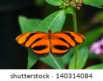 Banded Orange Butterfly ...