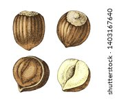 4 hand drawn colorful hazelnuts ... | Shutterstock .eps vector #1403167640