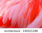 Bright Red Flamingo Birds