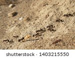 Several ants following an ant...