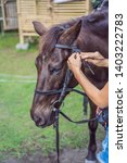 boy horseback riding ... | Shutterstock . vector #1403222783