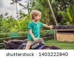 boy horseback riding ... | Shutterstock . vector #1403222840