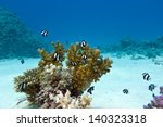 coral reef with hard coral and... | Shutterstock . vector #140323318