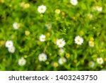 abstract blurred   defocused of ... | Shutterstock . vector #1403243750