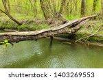 Fallen Tree Trunk As A Bridge...