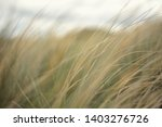 dune grass in the breeze | Shutterstock . vector #1403276726