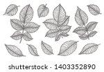 rose flower leaves set hand... | Shutterstock .eps vector #1403352890