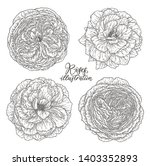 rose flowers set hand drawn in... | Shutterstock .eps vector #1403352893