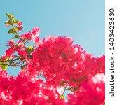 floral background  spring...   Shutterstock . vector #1403423630