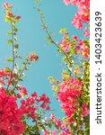 floral background  spring...   Shutterstock . vector #1403423639