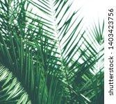 botanical backdrop  exotic...   Shutterstock . vector #1403423756