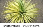 plants of the canarian flora ... | Shutterstock . vector #1403445896