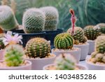 variety of small cactus and...   Shutterstock . vector #1403485286