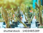 variety of small cactus and...   Shutterstock . vector #1403485289