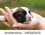 Newborn puppy dog resting in woman hands - closeup - stock photo