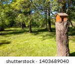 Stock photo squirrel house in spring forest park landscape squirrel house in forest squirrel house in forrest 1403689040
