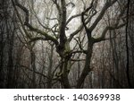 tree with twisted branches in a ...